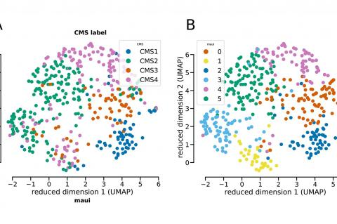 Tumour samples are clustered into the four standard colorectal subtypes based on gene expression levels. The deep-learning maui platform classified the same samples similarly, but found that subtype 2 (represented in green in figure A) might actually be two separate types (represented in green and light blue in figure B) (Credit: Akalin lab, MDC)